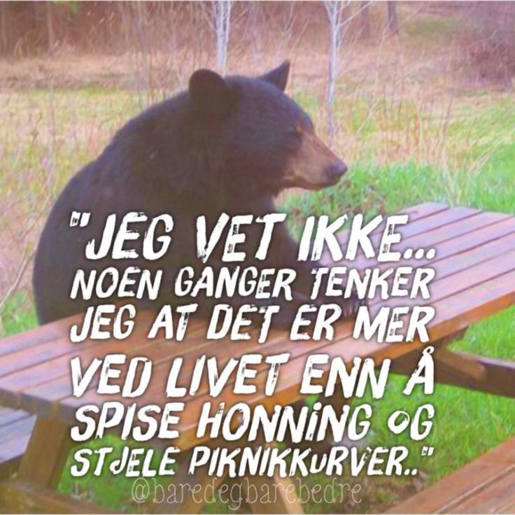 filosofibjørn